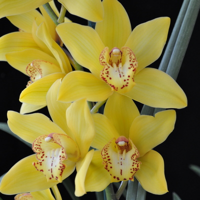 Orchid Care Guides