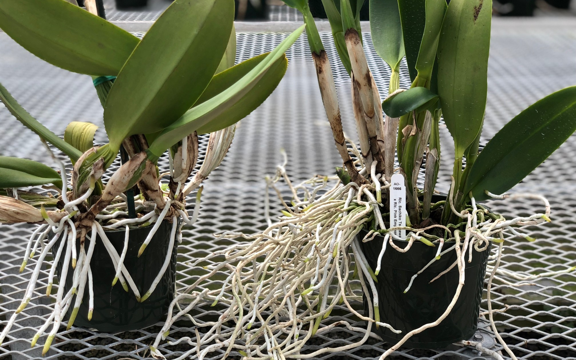 Orchid Media -- What Should I Use to Plant My Orchid